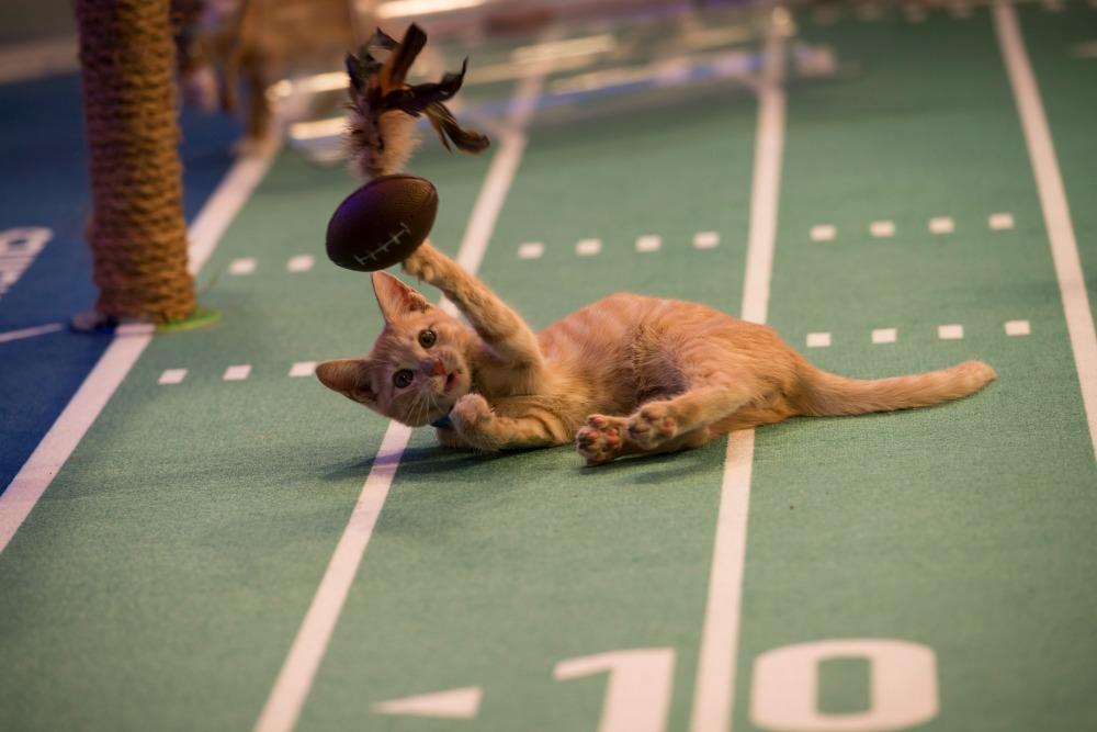 Kitten Bowl 7